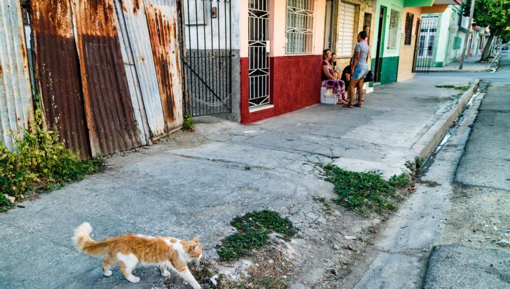 Photo of cat walking across the sidewalk into the street.