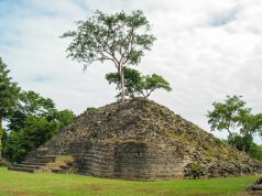 Photo of small Maya pyramid with large tree growing out of the top.